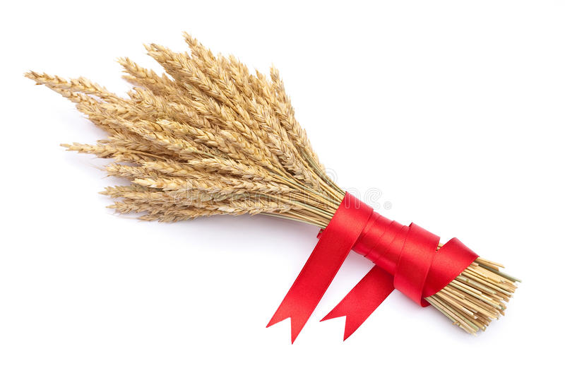 Download Ears Of Wheat Tied With Red Ribbon Stock Image - Image of backgrounds, color: 16382577