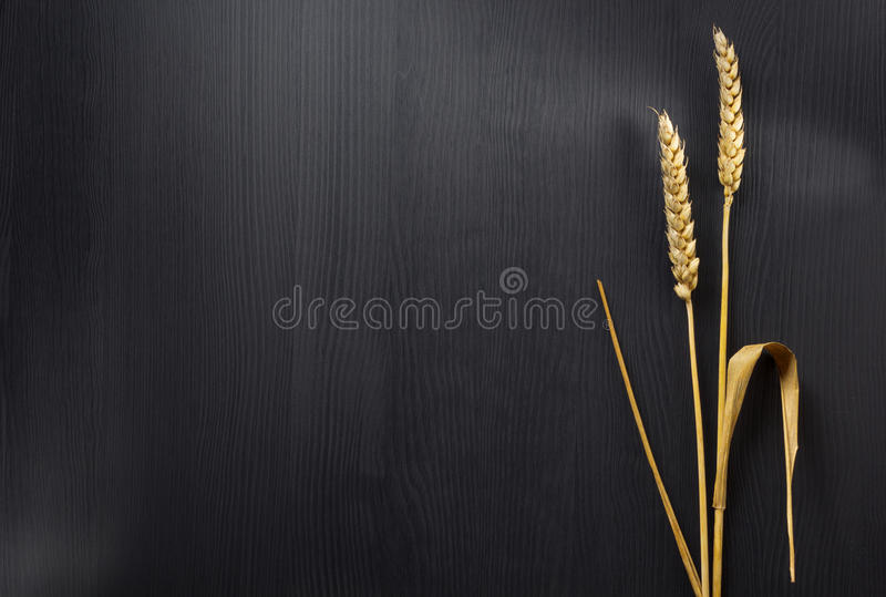 Ears of wheat on wood royalty free stock image
