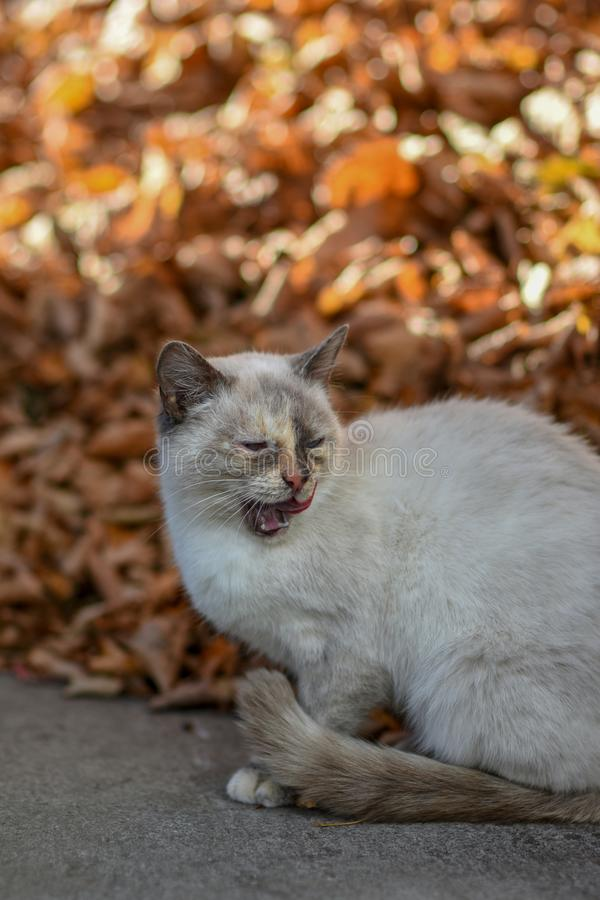 On earth cat has food and is looking forward to royalty free stock photo