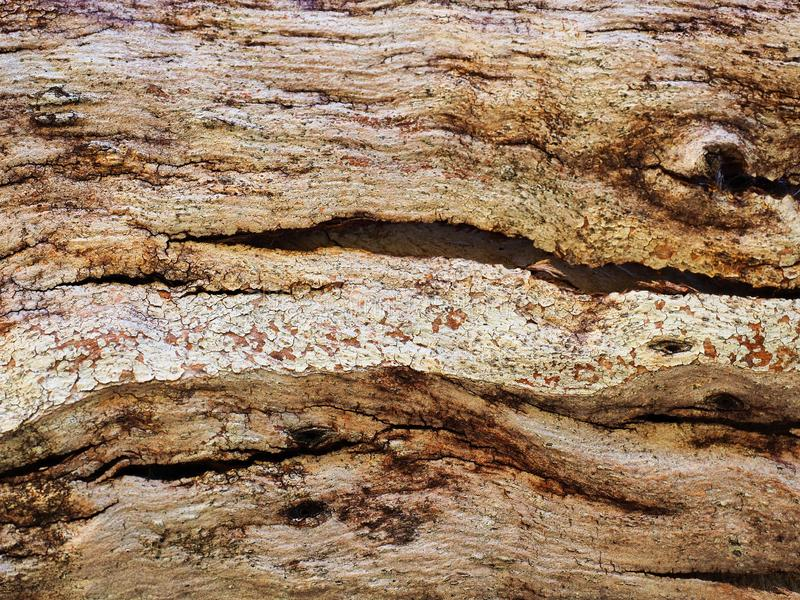 Earth Coloured Abstract Textured bark Pattern royalty free stock images