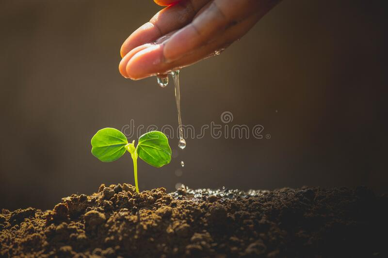 Earth day concept. Drop water on hand for growing tree. Protect the environment. Renewable energy for future. Global warming concept. Sustainable resources royalty free stock photo