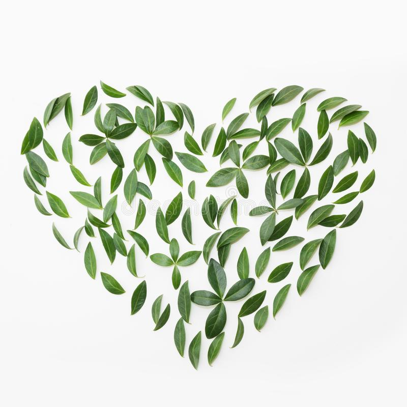 Earth day concept. Floral pattern of green leaves as heart on white. Flat lay stock images