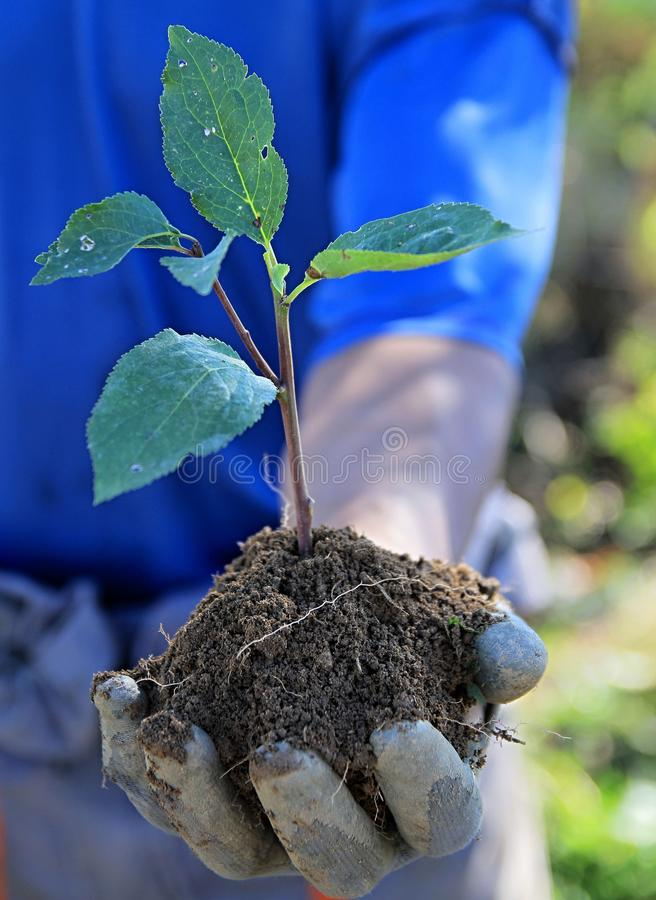 Earth day hand holding plant royalty free stock photos