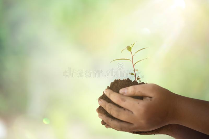 Earth Day In the hands of trees growing seedlings. Female hand holding tree on nature field grass. Bokeh green Background. royalty free stock images