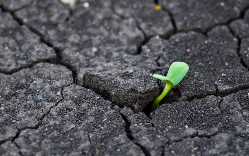 Earth Day. Sunflower sprout makes its way through cracked soil. Sowing and growing crops in the fields.  copy space.  royalty free stock photos