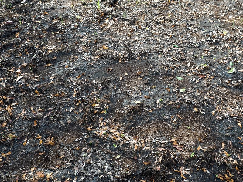 Earth ground covered with compost mulch fragment as a texture background.  stock photography