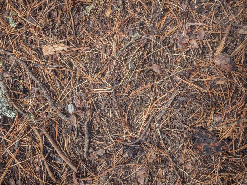 Earth ground covered with compost mulch fragment as a texture background stock images