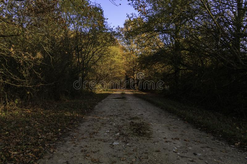 Dirt road in the middle of a forest with autumn colors that the sun illuminates with its orange light. Earth path in the middle of a forest with the colors of royalty free stock photo