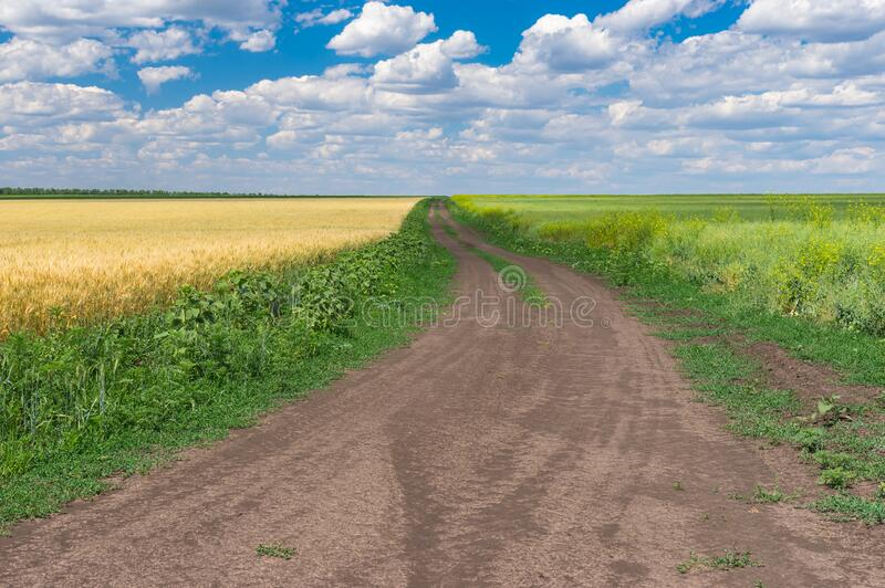 Earth road between ripe wheat and flowering rape seed fields near Dnipro cit. Y at summer season, central Ukraine royalty free stock images