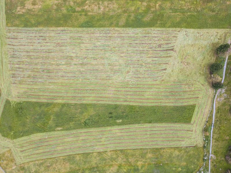 Earth`s line. A drone vertical perspective of the ground`s colors and shapes. Agricultural grass fields cut. Summer time royalty free stock photo