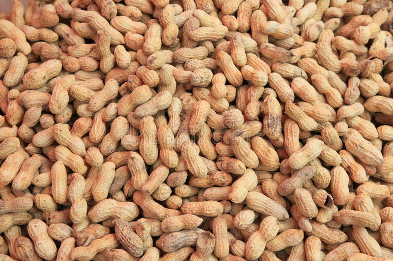 Download Earthnuts stock photo. Image of almond, dried, fattening - 12919924