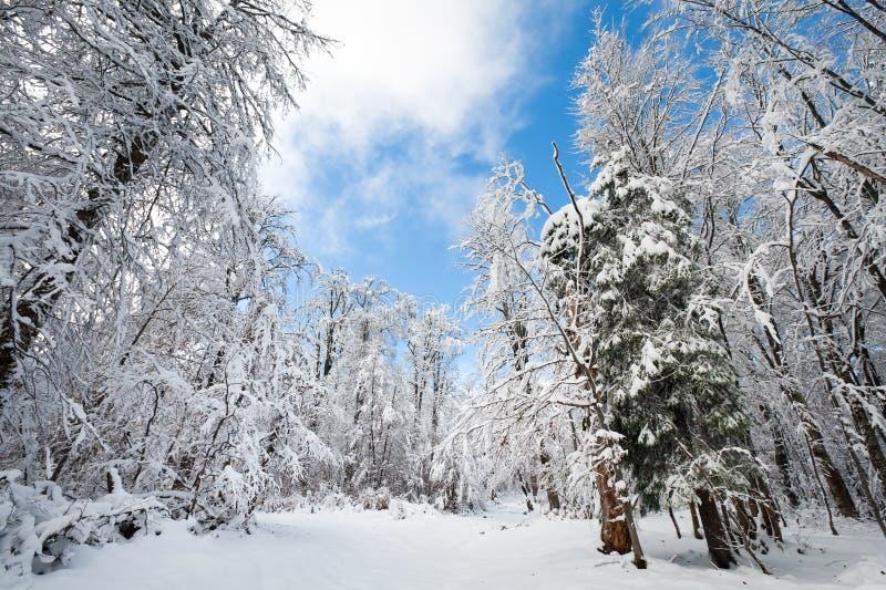 Earthroad Snowbound di inverno fotografia stock