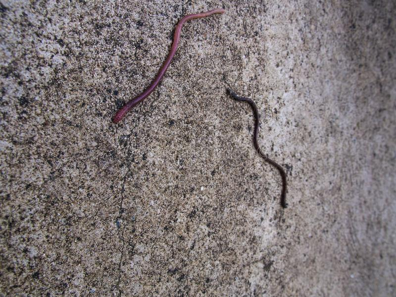 The Earthworm Crawling. On The Floor royalty free stock photos