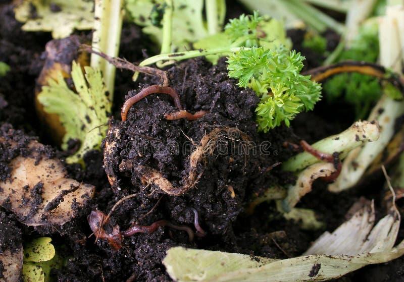 earthworms компоста ящика стоковая фотография rf