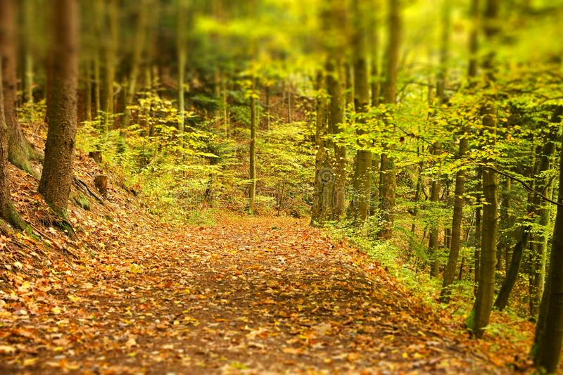 Earthy forest path royalty free stock photo