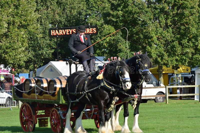 East Anglia Equestrian Fair pair of heavy horses and cart in ring. IPSWICH SUFFOLK UK 25 October 2014: East Anglia Equestrian Fair pair of heavy horses and cart royalty free stock images