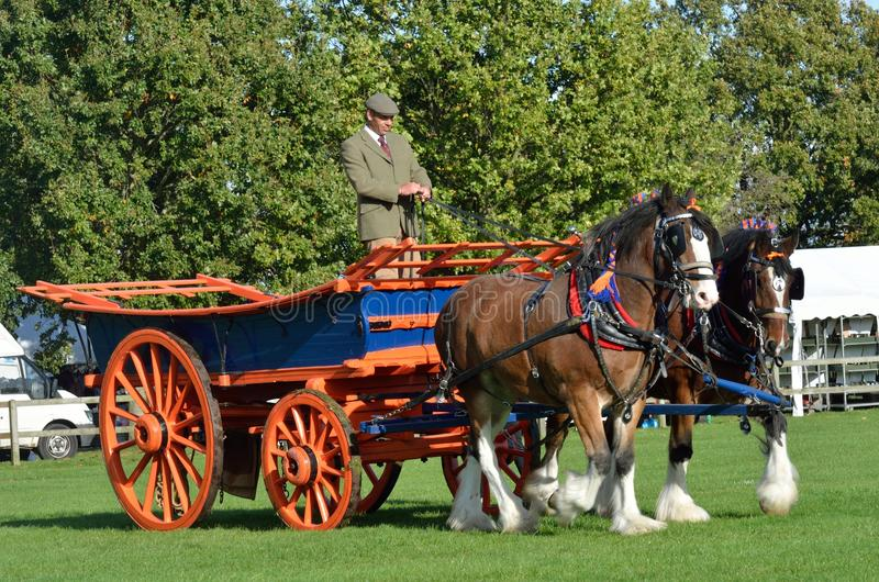 East Anglia Equestrian Fair pair of shire horses and cart showing in ring. IPSWICH SUFFOLK UK 25 October 2014: East Anglia Equestrian Fair pair of shire horses stock images