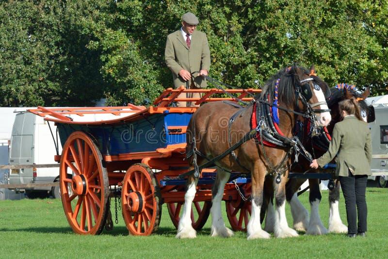 East Anglia rid- ganska par av den grevskaphästar och vagnen i cirkel arkivfoto