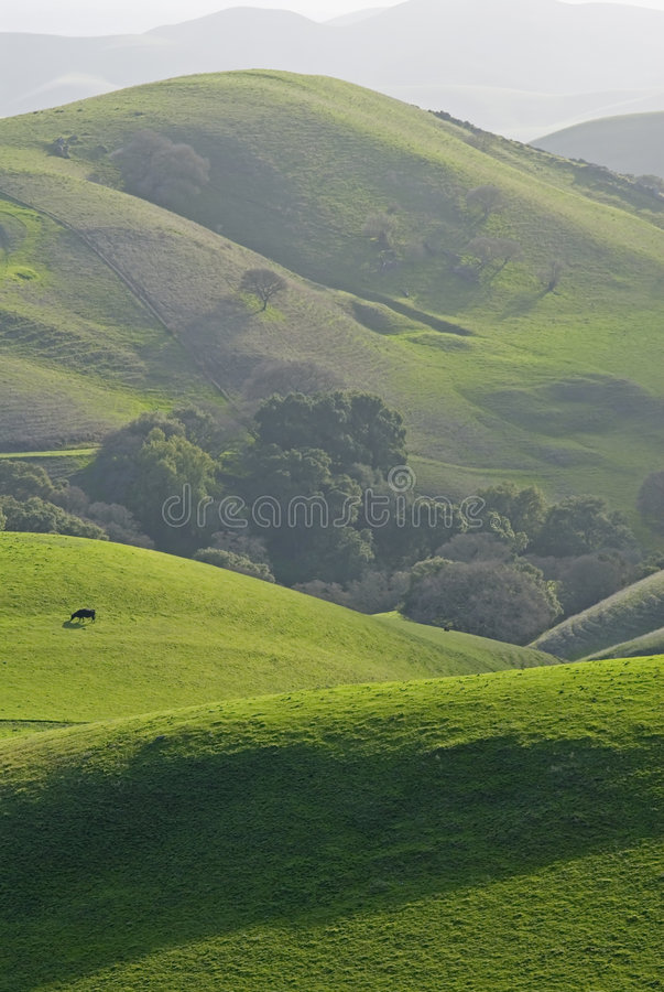 East bay rolling hills royalty free stock photos