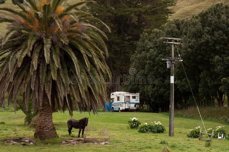 East Coast, New Zealand scene with palm, horse and old campervan. East Coast New Zealand field scene with phoenix palm tree, horse and old campervan royalty free stock photography