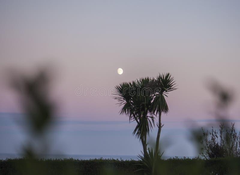 East Sussex, Zuid-Engeland - de maan en de palmen bij schemer stock foto
