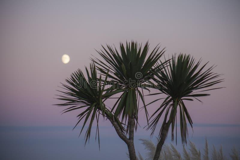 Eastbourne, East Sussex - de maan en de palmen bij schemer royalty-vrije stock afbeeldingen