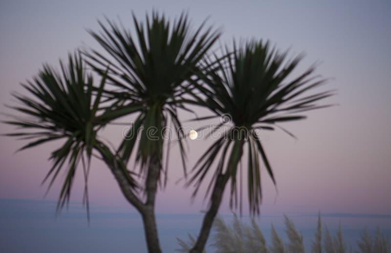 Eastbourne, East Sussex, Engeland - de maan en de palmen bij schemer royalty-vrije stock fotografie