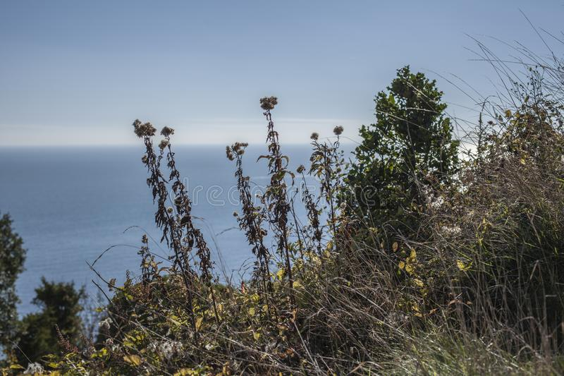 Eastbourne, East Sussex - greenery on the shore and the blue seas. This image shows a view of cliffs in Eastbourne, East Sussex, England. It was taken on a royalty free stock photos