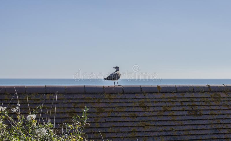 Eastbourne, England - blue skies and seas and a bird. This image shows a view of a beach in Eastbourne, England, the UK. Eastbourne is a resort town on England royalty free stock images