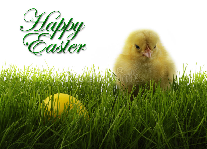 Easter. Chicken and  egg stock images