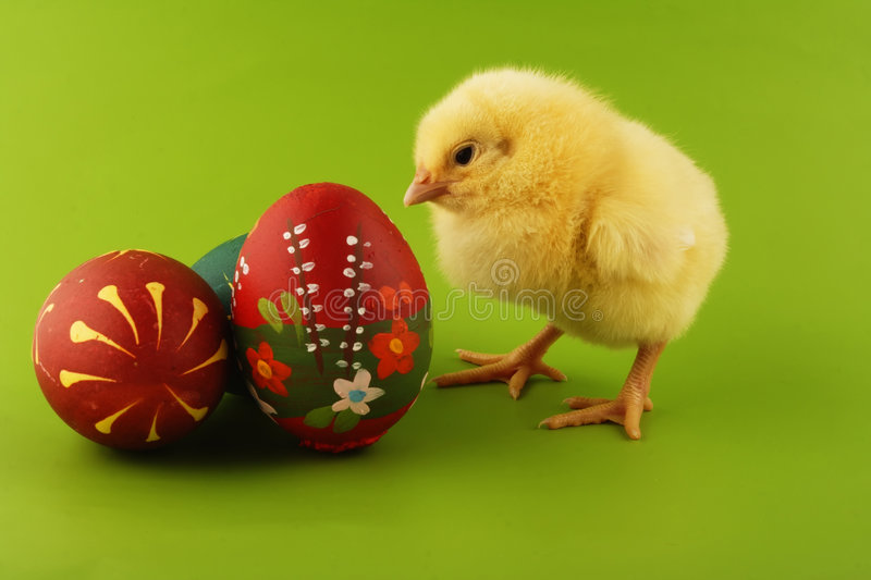 Easter. Chicken and  egg stock photos