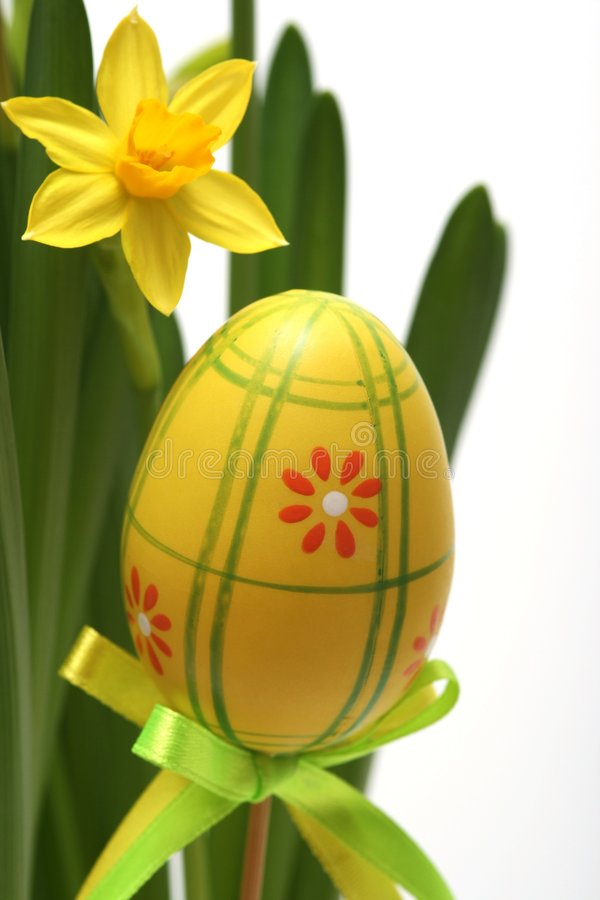Easter. Egg and daffodil for  background stock images