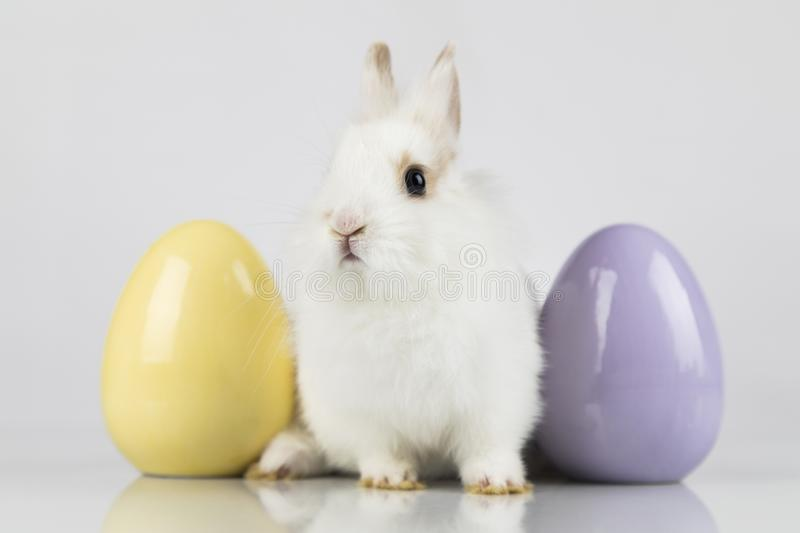 Easter animal holiday, and eggs white background stock photography