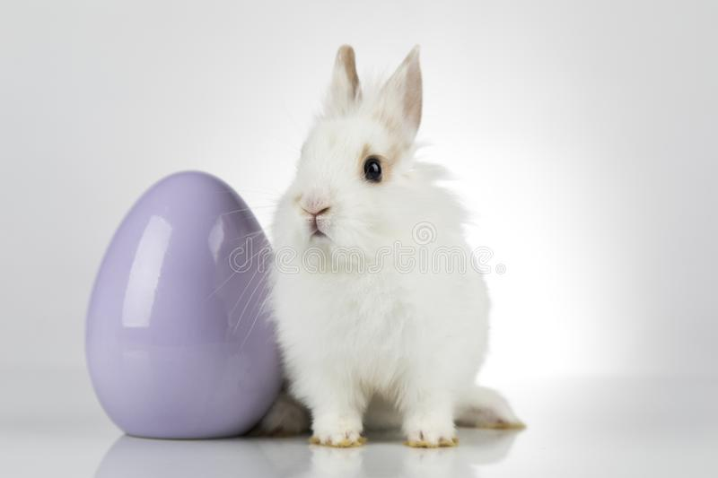 Easter animal holiday, and eggs white background stock photos