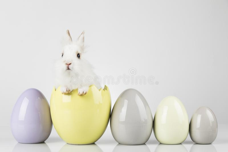 Little cute baby rabbit and easter eggs, white background royalty free stock photography