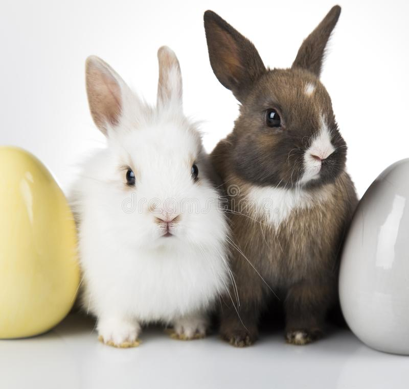 Little cute baby rabbit and easter eggs, white background royalty free stock photo