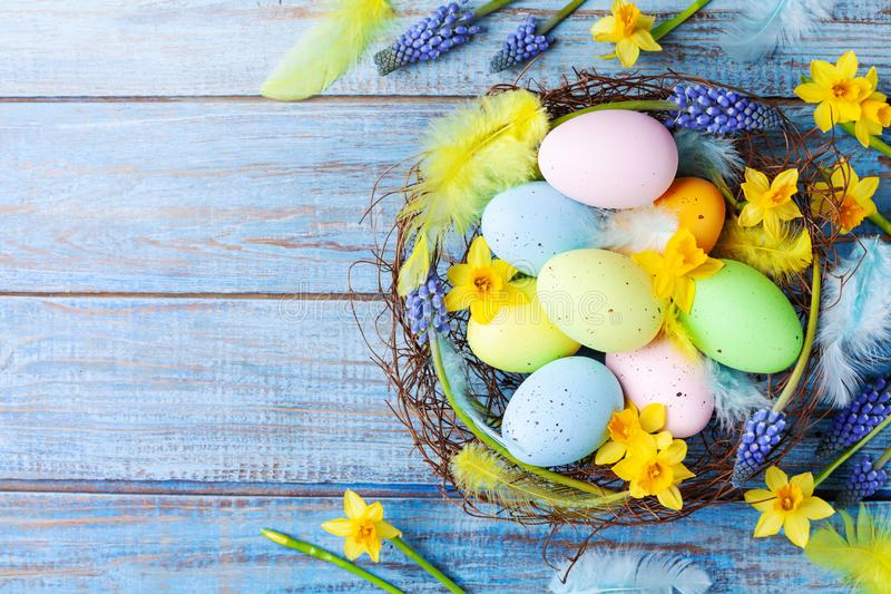 Easter background with colorful eggs in nest, feather and spring flowers top view. Holiday card or banner stock photography