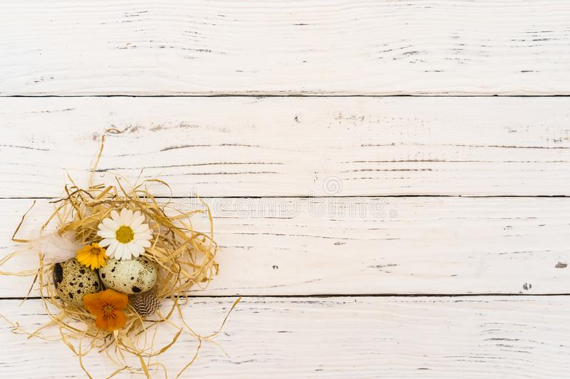 Easter background with cute straw nest with easter eggs and flowers on white wooden table royalty free stock photo