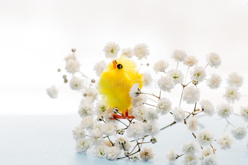 Easter background with easter decoration chicken royalty free stock image
