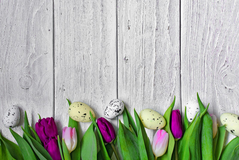 Easter background with eggs and purple tulips royalty free stock image