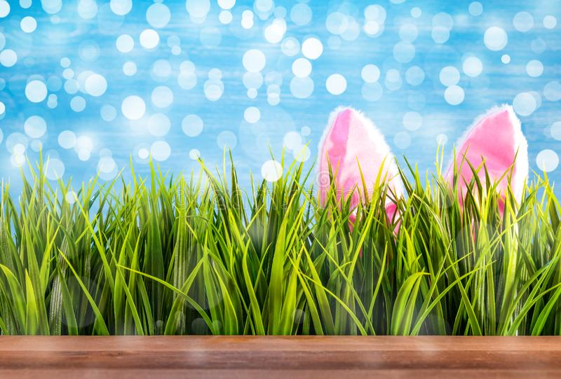 Easter background with green grass and bunnie ears.  royalty free stock images