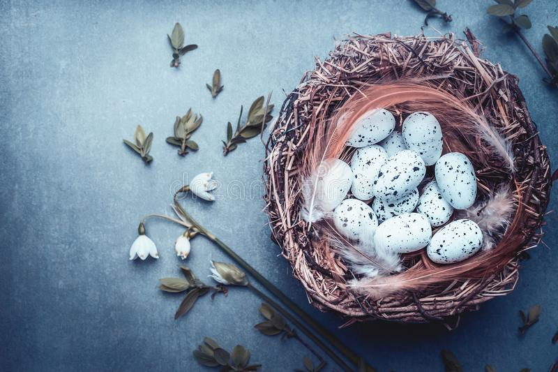 Easter background with nest of bird eggs and spring twigs and flowers, top view, place for text. Blue toned royalty free stock image