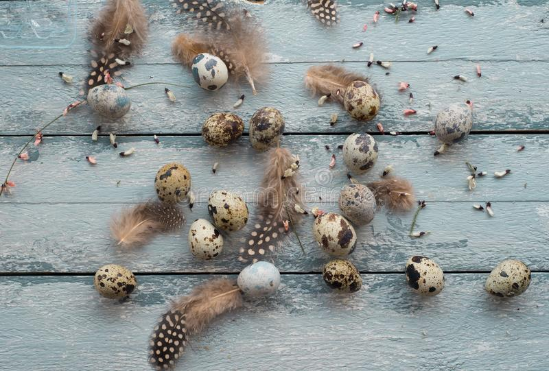 Easter background, quail eggs, feathers and yellow chrysanthemum over wooden background royalty free stock photo