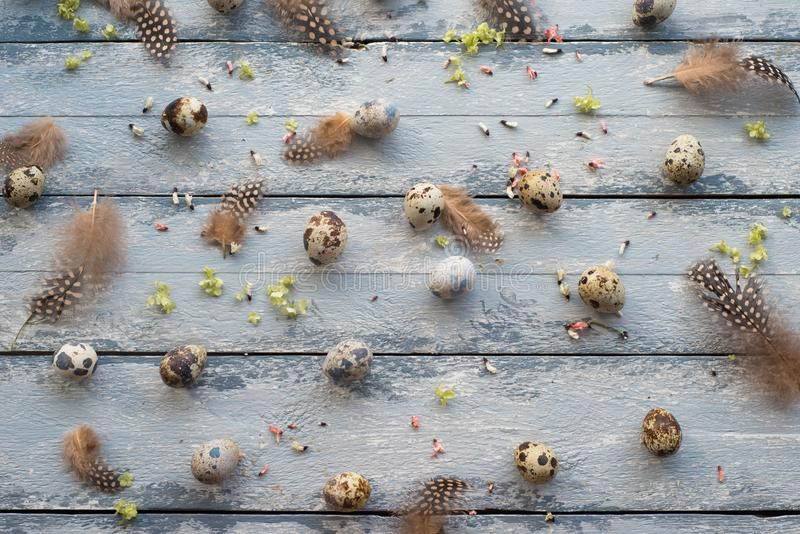 Easter background, quail eggs, feathers and yellow chrysanthemum over wooden background royalty free stock image