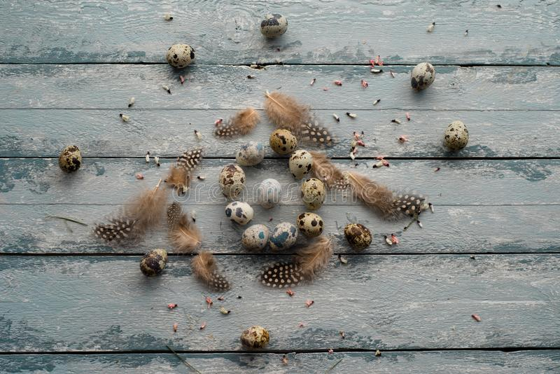 Easter background, quail eggs, feathers and yellow chrysanthemum over wooden background royalty free stock photography