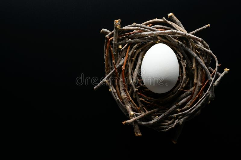 White chicken egg in the nest of twigs on a black background stock images