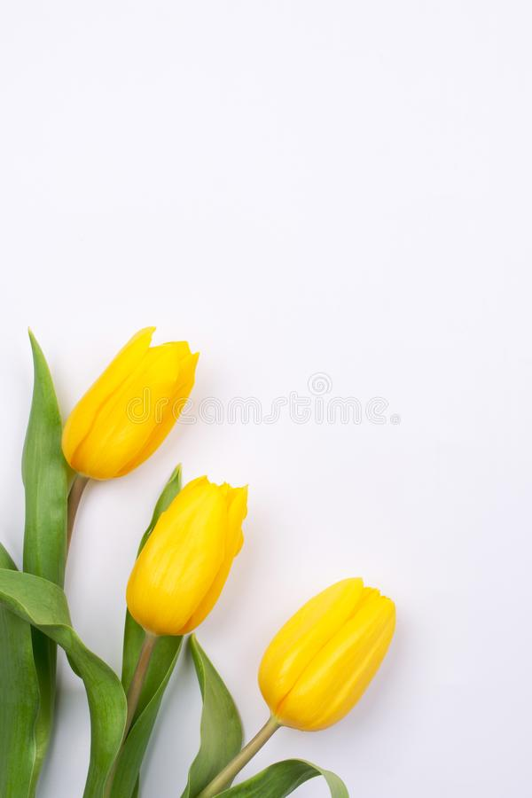 Easter background with yellow tulipson on white. Greeting card for mothers day. Copy space. royalty free stock images