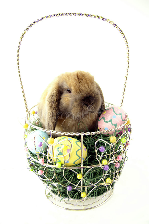 Download Easter basket stock photo. Image of painted, cuddle, fluffy - 1963382