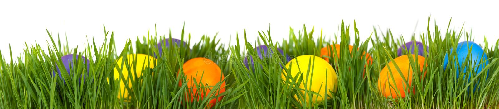 Easter border. Easter eggs in green grass over white background royalty free stock image