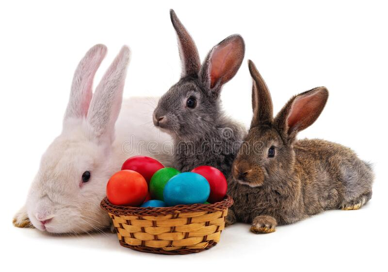 Easter bunnies with colored eggs. Isolated on a white background royalty free stock images